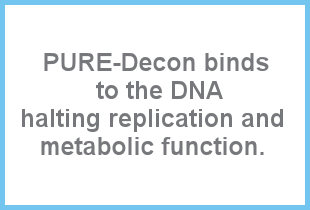 DNA halting replication and metabolic function