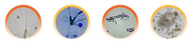 EDLab Microbes