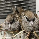 Birds Affect HVAC Fire Safety