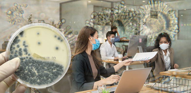 Aspergillus Affects COVID-19 Inside a Building